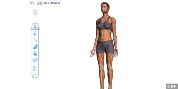 Google Body Browser