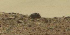 """Optische Täuschung – """"Maus"""" auf dem Mars gesichtet"""