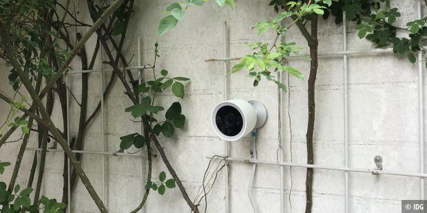 Nest Cam Outdoor IQ im Rosenspalier