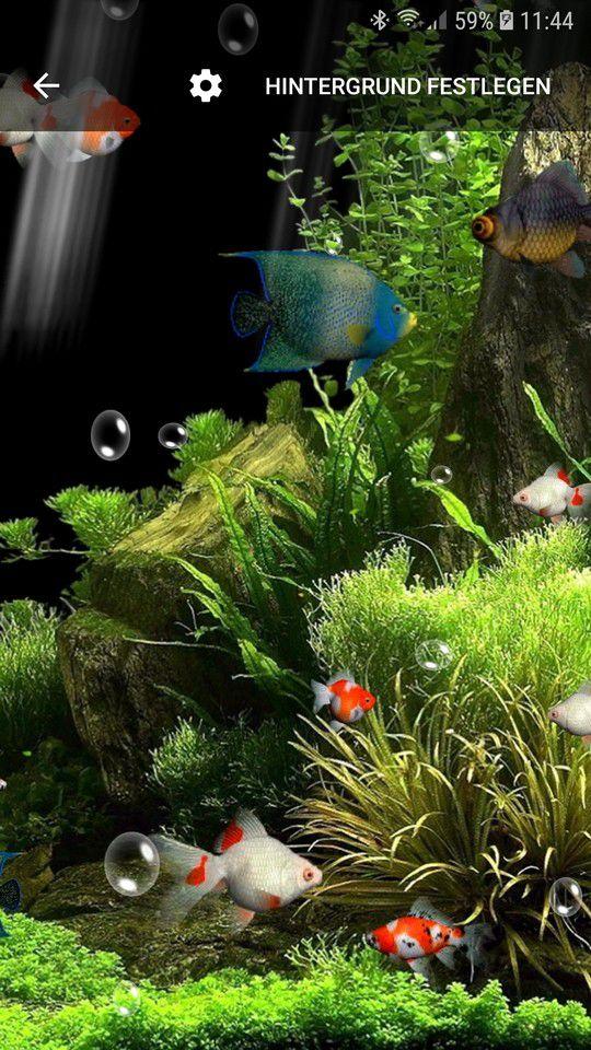 Aquarium live hintergrund pc